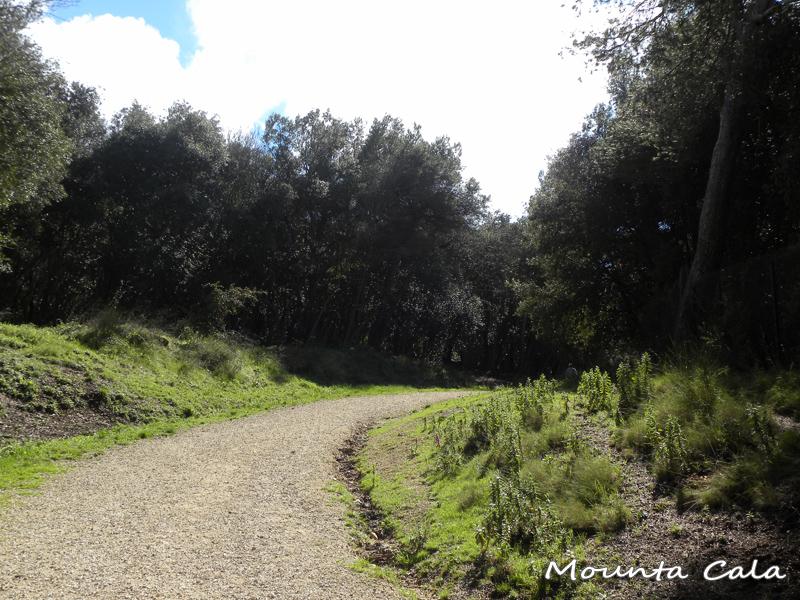 DSCN9852 Balade au Parc du Mont Vinaigrier à Nice