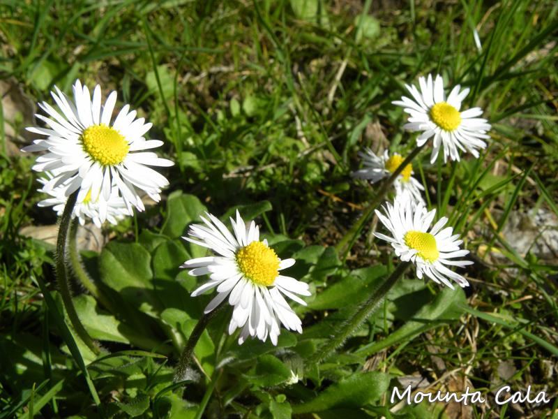DSCN99151 Balade au Parc du Mont Vinaigrier à Nice