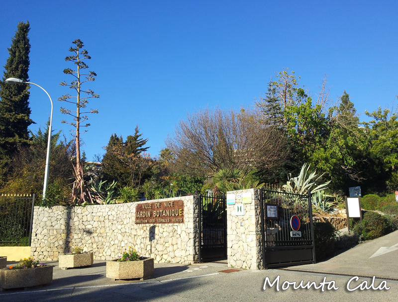 Promenade au jardin botanique de nice littoral for Jardin botanique nice