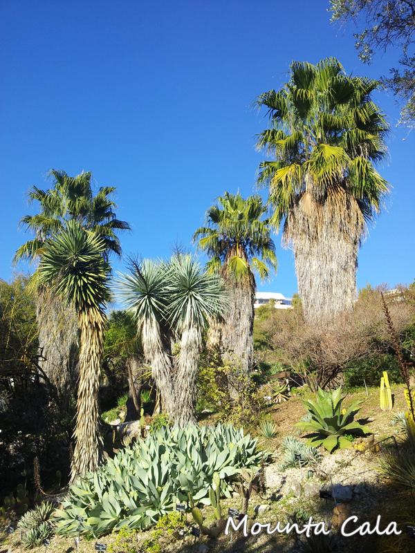 20140124 152632 Promenade au jardin botanique de Nice   Littoral