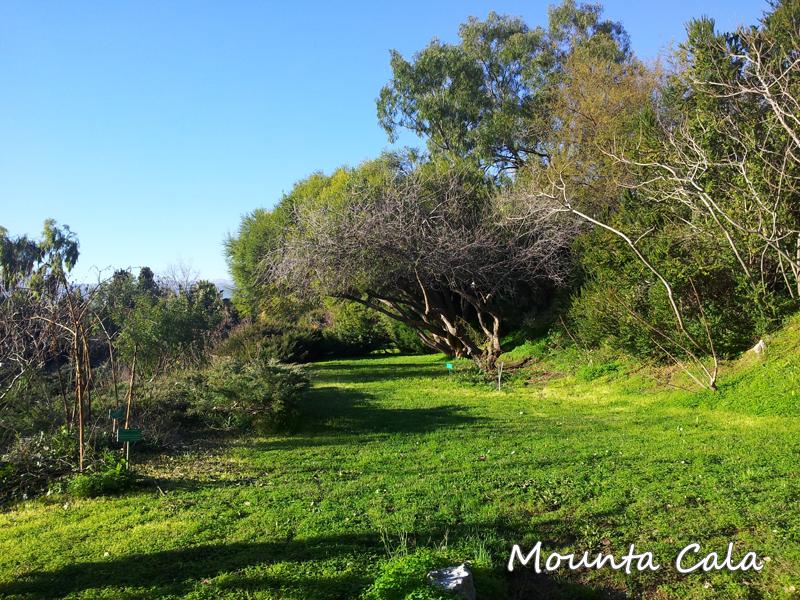 20140124 154755 Promenade au jardin botanique de Nice   Littoral