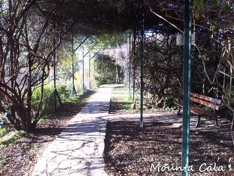 20140124 154920 Promenade au jardin botanique de Nice   Littoral