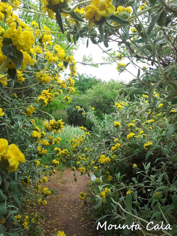 20140427 152026 Promenade au jardin botanique de Nice   Littoral