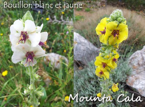 Sans titre 1 Promenade au jardin botanique de Nice   Littoral